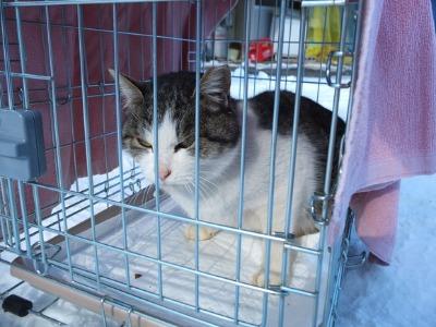 冬の猫 3:保護猫_a0180681_21185488.jpg