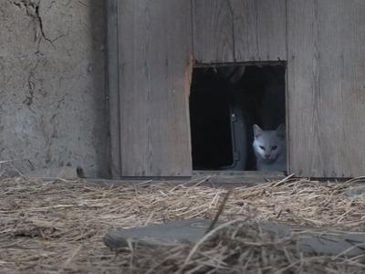冬の猫 3:保護猫_a0180681_2126150.jpg