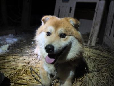 冬の猫 4:犬の声_a0180681_21332190.jpg