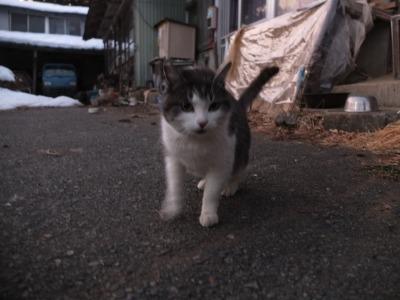冬の猫 4:犬の声_a0180681_21372645.jpg