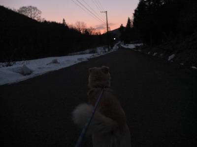 冬の猫 4:犬の声_a0180681_21401644.jpg
