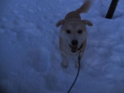 冬の猫 4:犬の声_a0180681_21402265.jpg