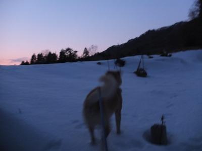 冬の猫 4:犬の声_a0180681_21432132.jpg