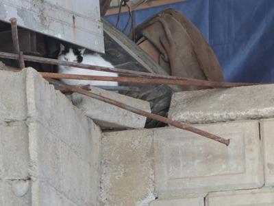 冬の猫 2:new face_a0180681_2172337.jpg