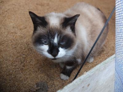 冬の猫 2:new face_a0180681_2191796.jpg