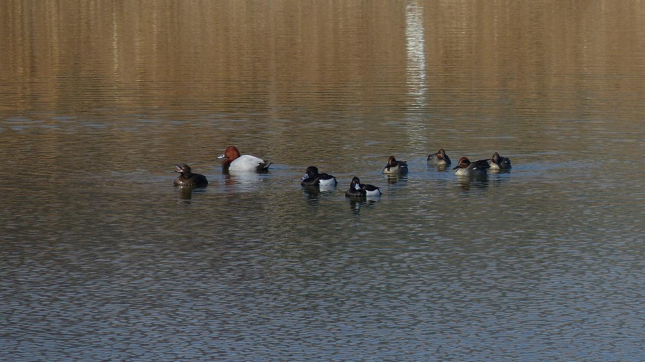 【 日記 2014 1/22 (水) 】 沼の怪鳥!_a0185081_16221874.jpg
