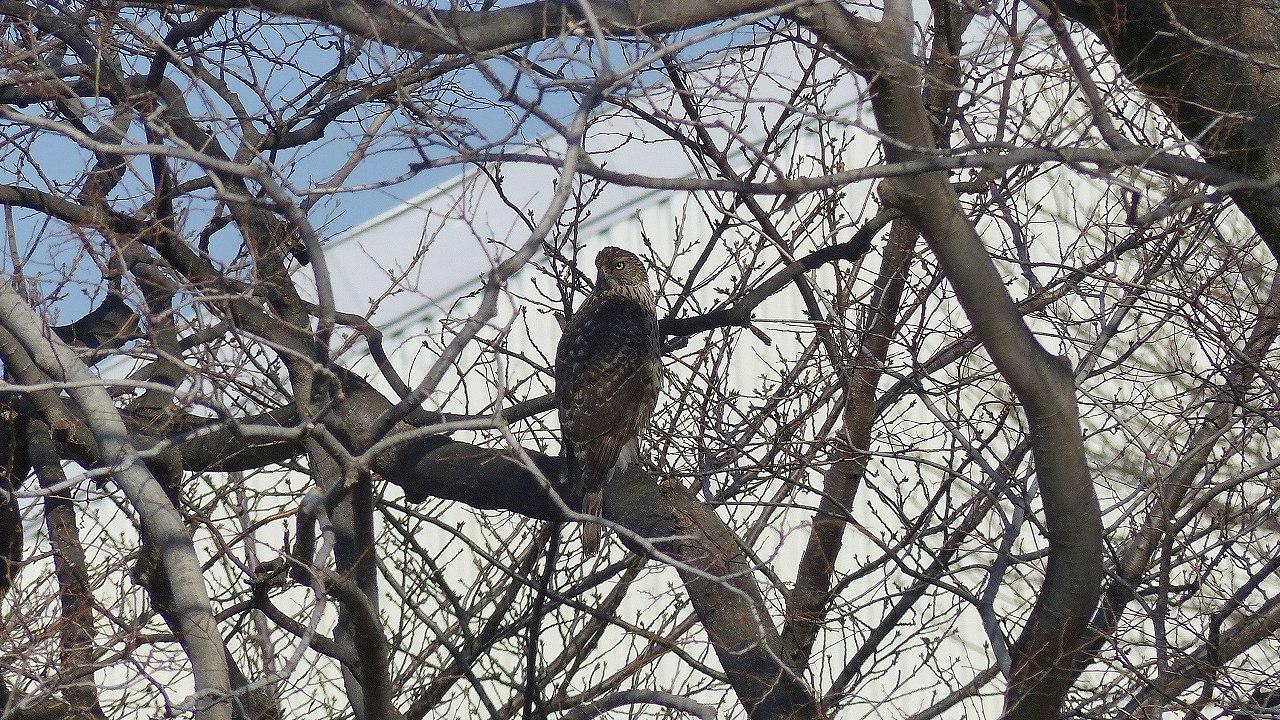 【 日記 2014 1/22 (水) 】 沼の怪鳥!_a0185081_16231314.jpg