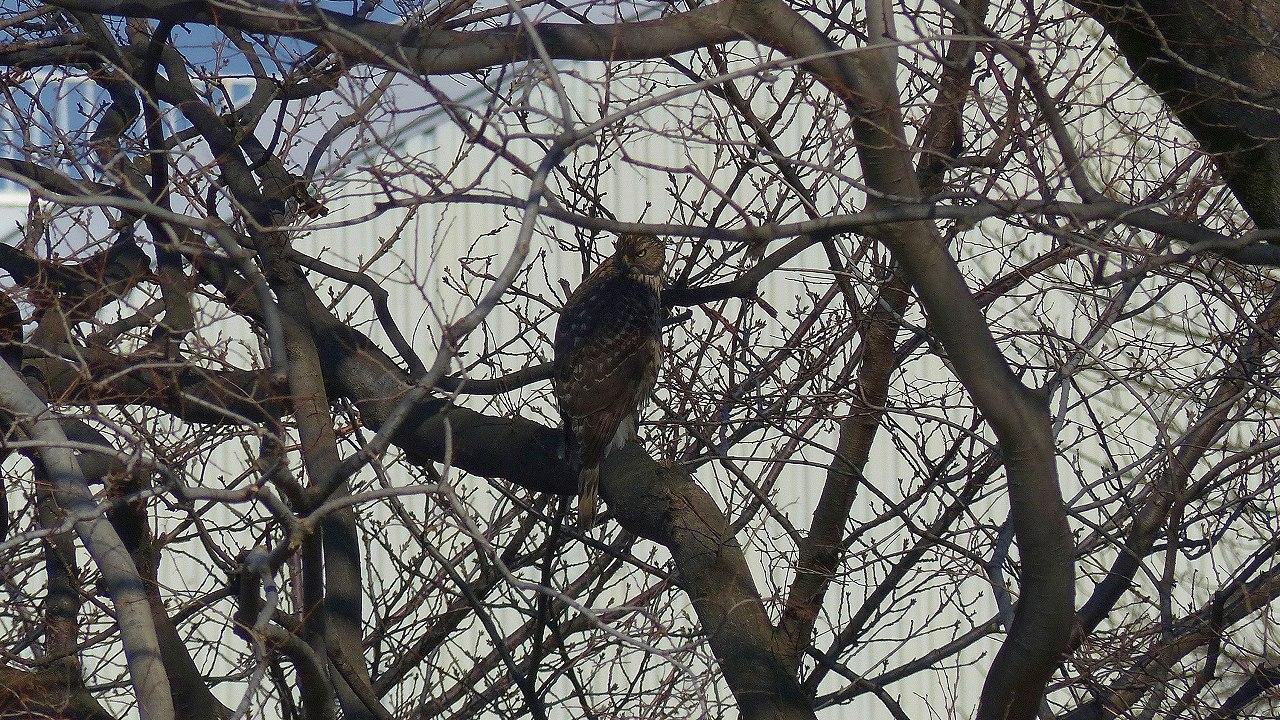 【 日記 2014 1/22 (水) 】 沼の怪鳥!_a0185081_1623146.jpg