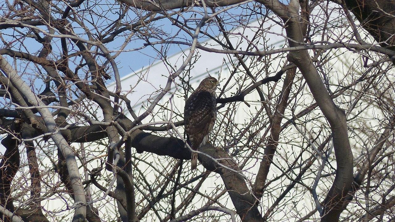 【 日記 2014 1/22 (水) 】 沼の怪鳥!_a0185081_16232678.jpg