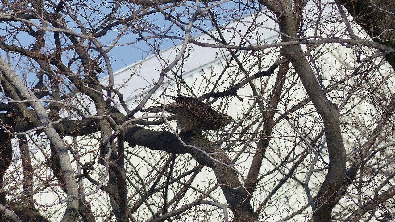 【 日記 2014 1/22 (水) 】 沼の怪鳥!_a0185081_16235821.jpg