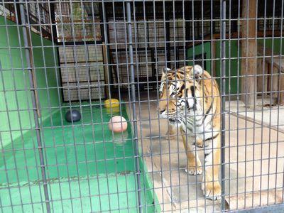 1/22 ☃ 大内山動物園 ☃_a0154110_11465943.jpg