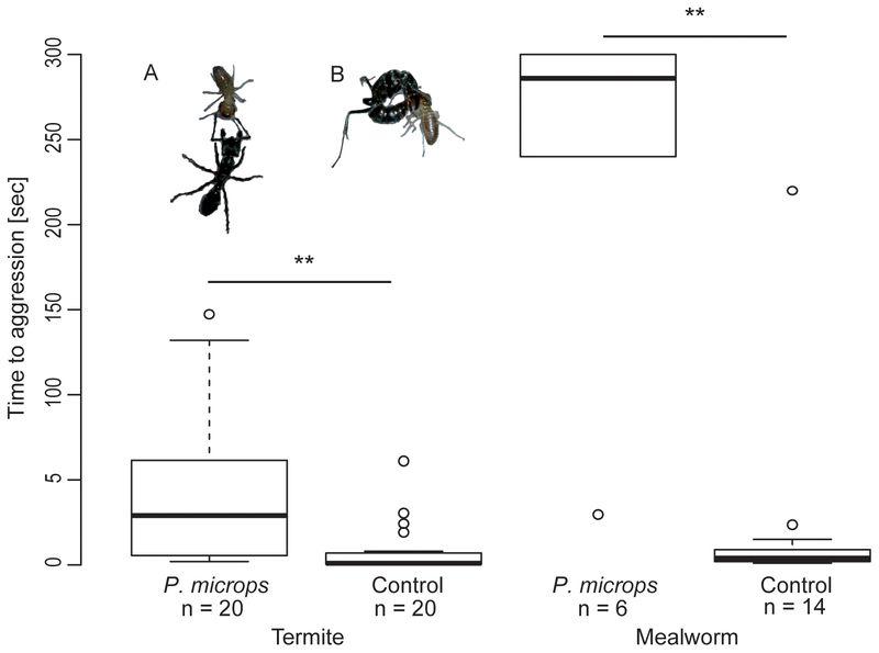 アリに対して「化学擬態」するカエル_c0025115_19382045.jpg