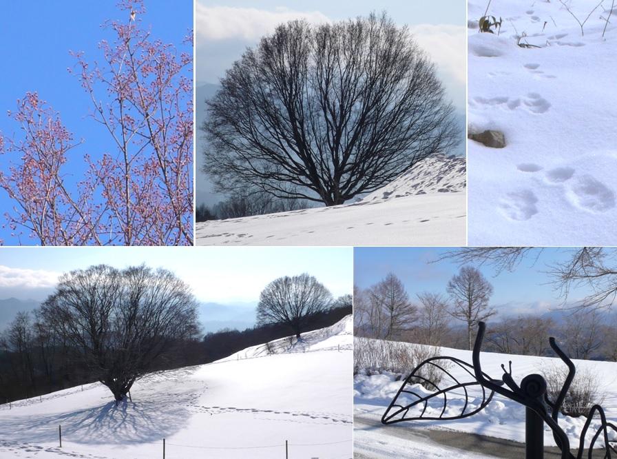 大峰高原の2本の樹_a0212730_21374191.jpg