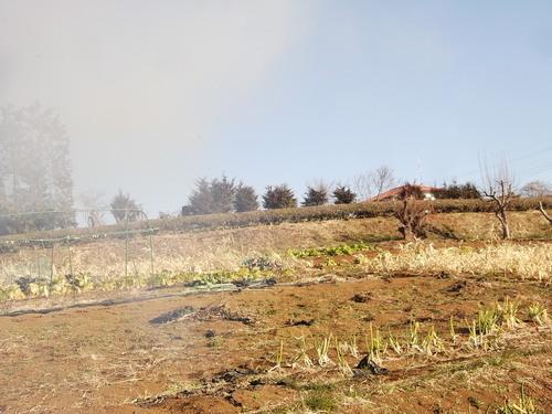 豆の草取り..._b0137932_2340467.jpg
