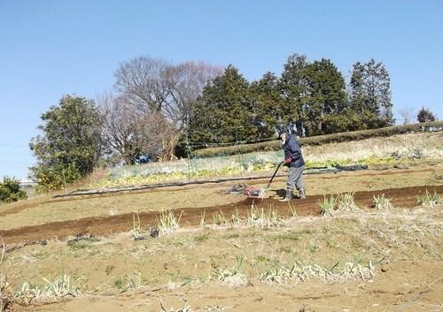 豆の草取り..._b0137932_2340567.jpg