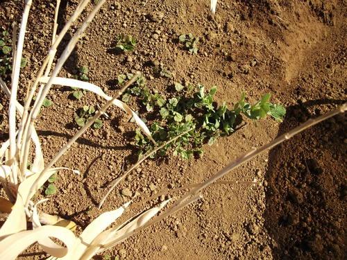 豆の草取り..._b0137932_23423150.jpg