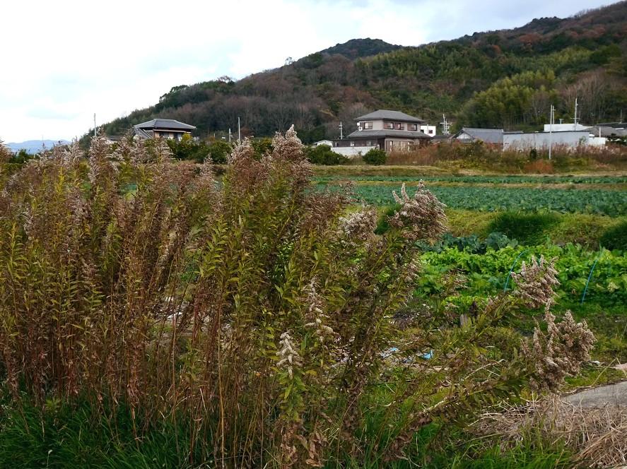 里山の風景_b0093754_20435647.jpg