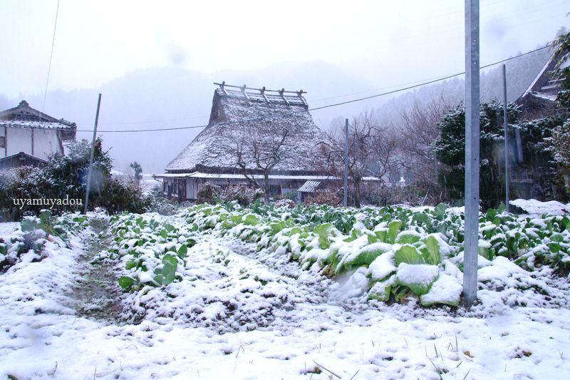 京都・美山かやぶきの里_a0157263_21262653.jpg