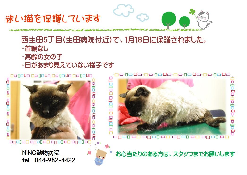 迷い猫保護中_e0288670_11314315.jpg