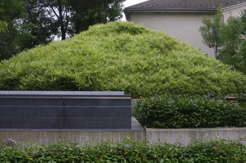 池上本門寺の見学会で見たこと_f0211178_18445478.jpg