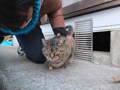 冬の猫 4:犬の声_a0180681_2424123.jpg