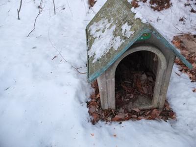 冬の猫 4:犬の声_a0180681_2444115.jpg
