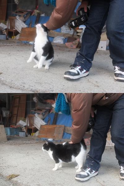 冬の猫 3:保護猫_a0180681_3115641.jpg