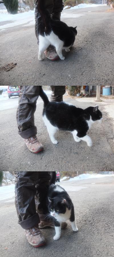 冬の猫 3:保護猫_a0180681_3131888.jpg