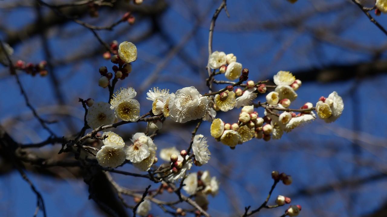 【 日記 2014 1/23 (木) 】 別撮り梅治郎_a0185081_17165086.jpg