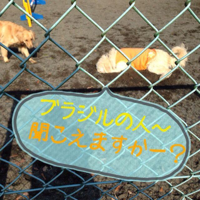 c0316599_2130177.jpg