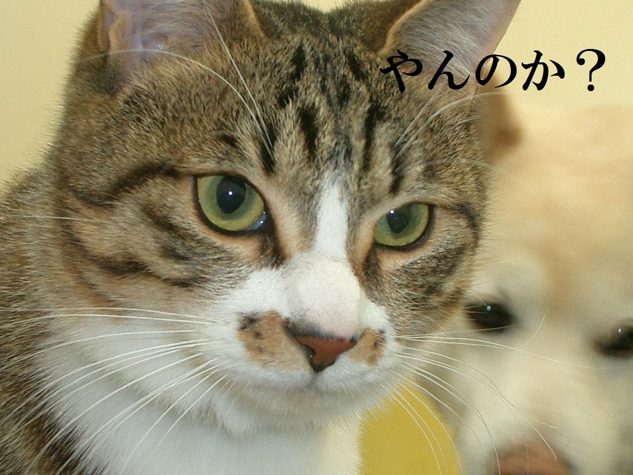 闘病日記 2日目_a0212145_198857.jpg