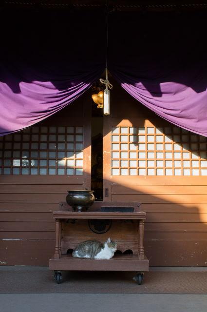 お寺に住む捨て猫さん_a0257652_16413742.jpg