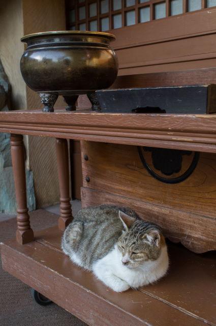 お寺に住む捨て猫さん_a0257652_16415117.jpg