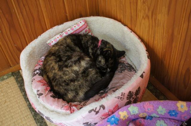 お寺に住む捨て猫さん_a0257652_16421844.jpg