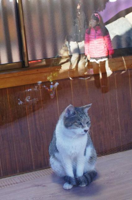 お寺に住む捨て猫さん_a0257652_16423410.jpg
