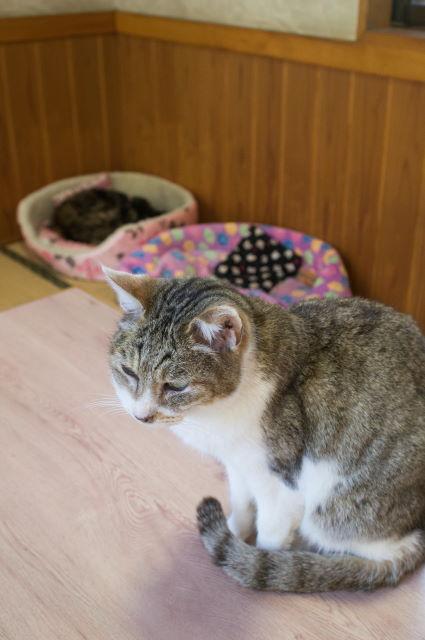 お寺に住む捨て猫さん_a0257652_1642694.jpg
