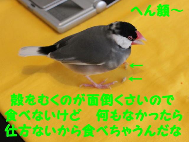 b0158061_23422169.jpg