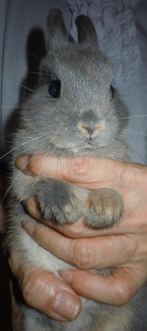 子ウサギのヒナミちゃんのこと_d0096268_17492893.jpg