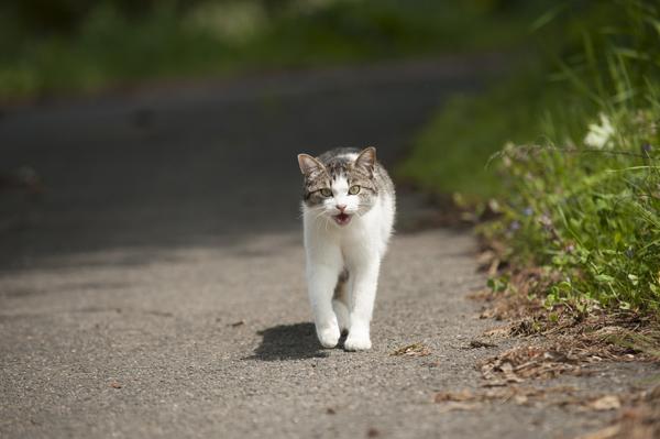 冬の猫 4:犬の声_a0180681_21102178.jpg
