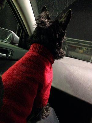 赤いセーターの犬_e0055098_8225374.jpg