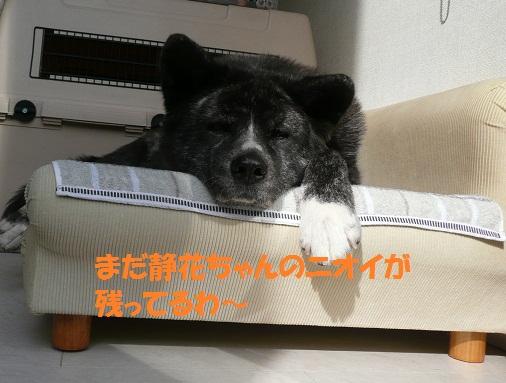 f0121712_214679.jpg