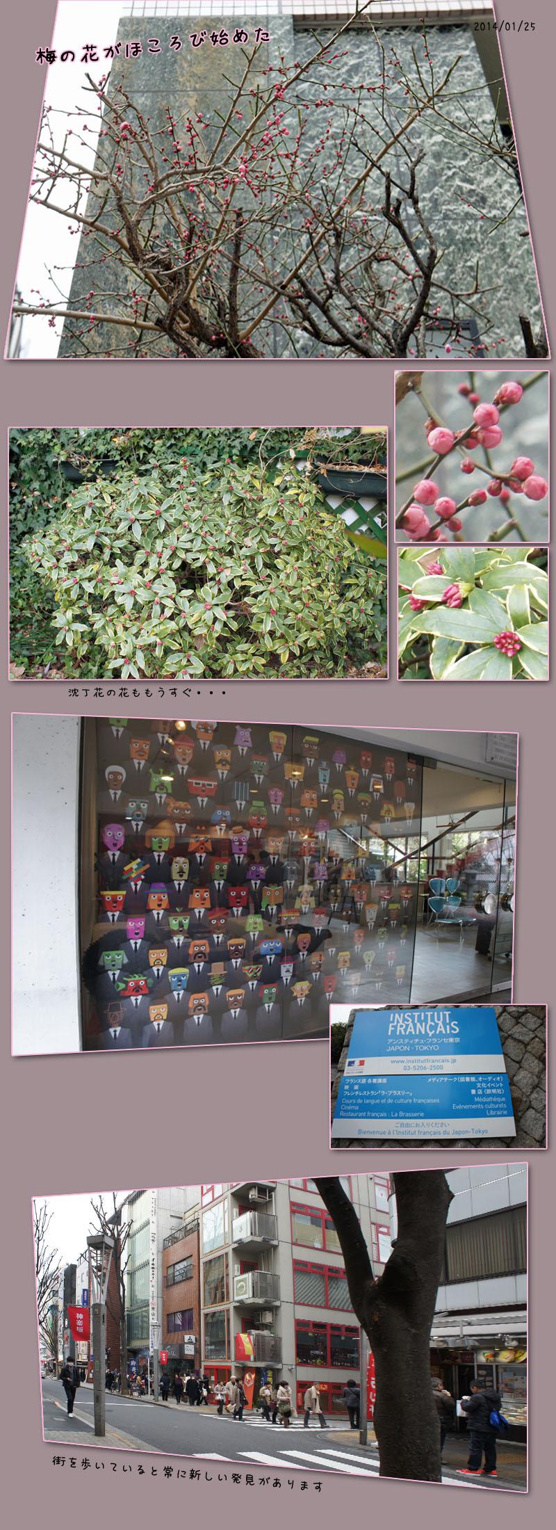 梅の花がほころび始めました(東京)_b0019313_17464194.jpg