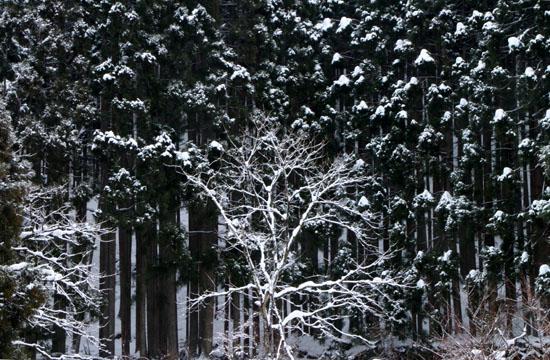 安曇川上流 坂下集落 14冬景色8_e0048413_17222671.jpg