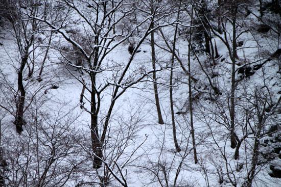 安曇川上流 坂下集落 14冬景色8_e0048413_17224059.jpg