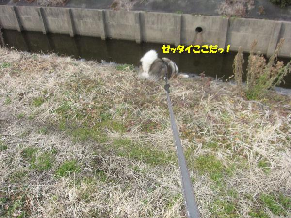 f0143123_20122669.jpg