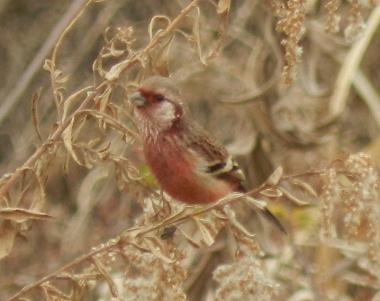 赤い鳥_e0172950_1656333.jpg