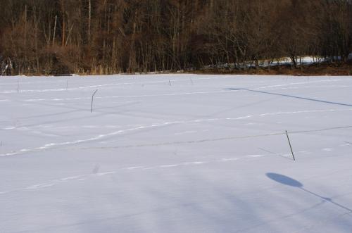 雪の小麦畑(2014)_c0110869_8314065.jpg