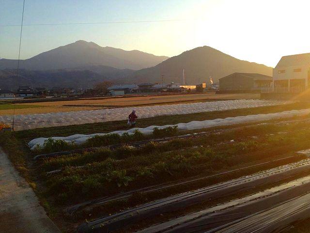 徳島・阿波市にある小野農園さんへ_a0277483_2211229.jpg