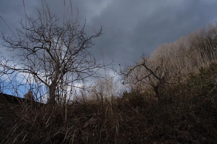 冬の落葉樹_e0276411_22512998.jpg