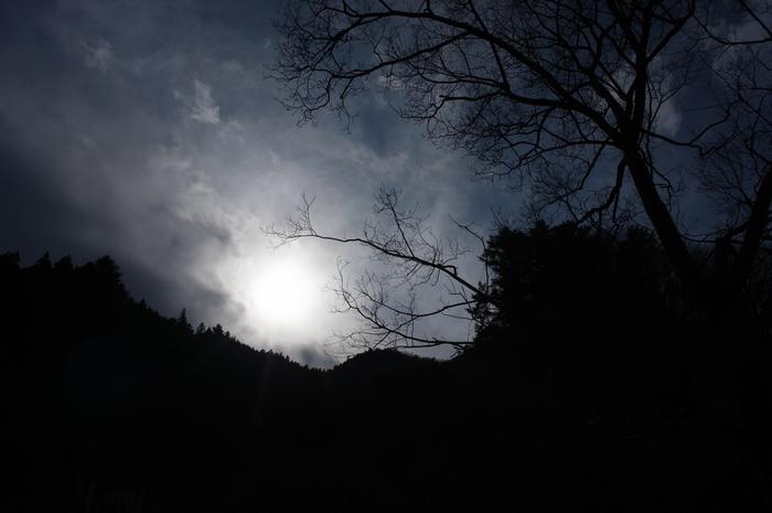 冬の落葉樹_e0276411_22513684.jpg